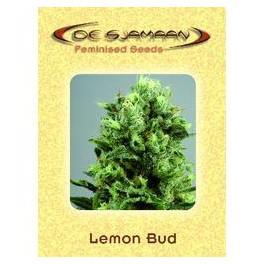 Lemon Bud (5ks)